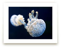 Blue and White Jellyfish