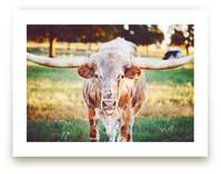 Texas Longhorn by Jessica Marchetti