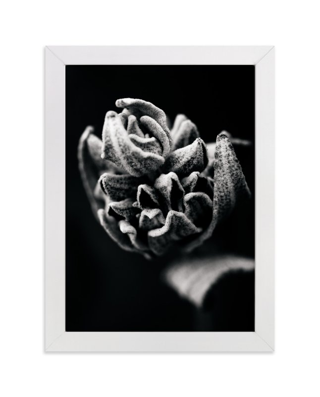 """""""Wild Sage in Black and White II"""" - Art Print by Kamala Nahas in beautiful frame options and a variety of sizes."""