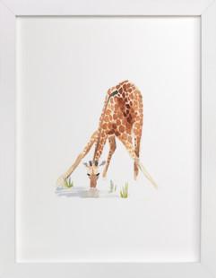 Giraffe at the Waterhole Self-Launch Children's Art Print