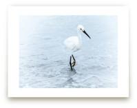 Strutting Bird on the Beach