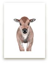 Baby Animal Bison