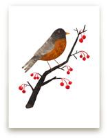 American Robin by Evelline Andrya