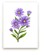 Aster Flowers by Evelline Andrya