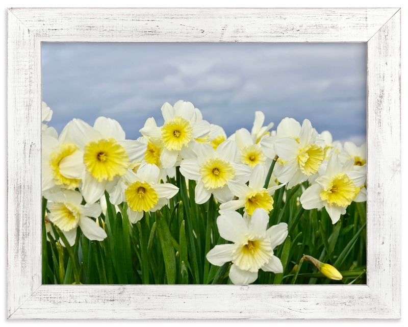 """""""Daffs 3"""" by Jan Kessel in beautiful frame options and a variety of sizes."""