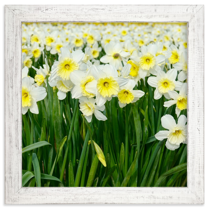 """Daffs 2"" by Jan Kessel in beautiful frame options and a variety of sizes."