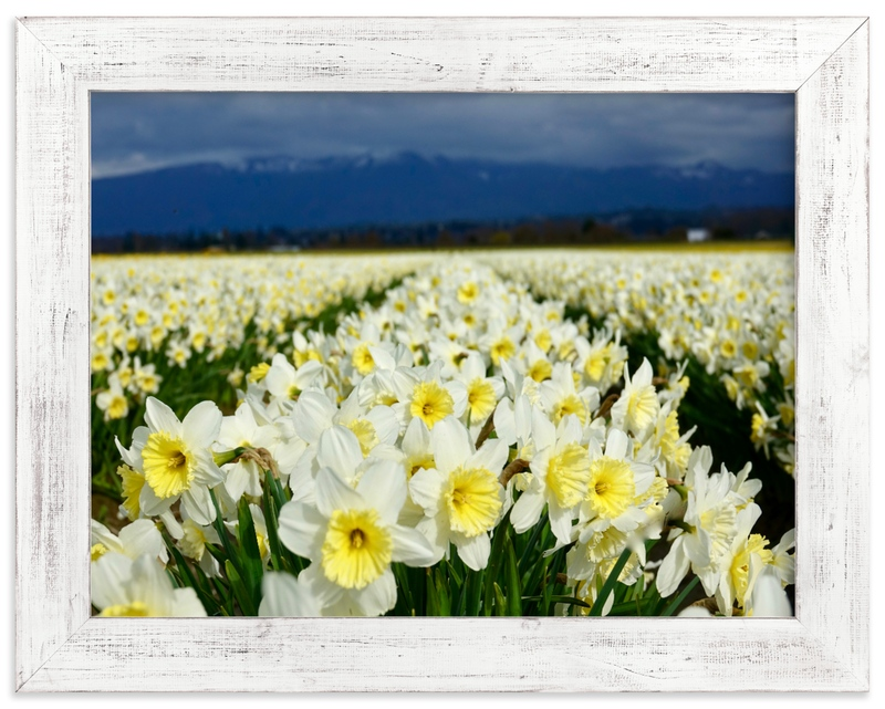 """""""Cheerful Daffs"""" by Jan Kessel in beautiful frame options and a variety of sizes."""