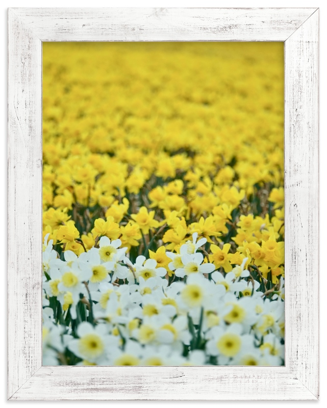 """Daffs 4"" by Jan Kessel in beautiful frame options and a variety of sizes."