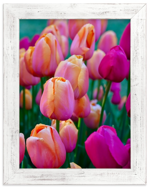 """""""Springtime Tulips"""" by Jan Kessel in beautiful frame options and a variety of sizes."""