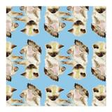 Siamese Kitten Wrapping... by Lauren Rogoff
