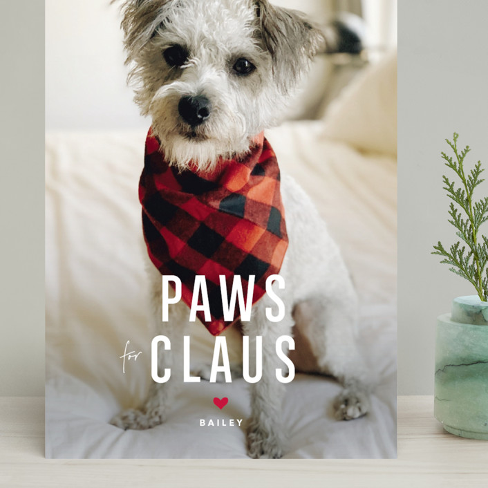 """""""Paws for Claus"""" - Funny Grand Holiday Cards in Snow by Guess What Design Studio."""