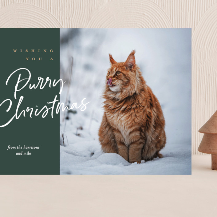 """purry christmas"" - Funny Grand Holiday Cards in Evergreen by Eric Clegg."